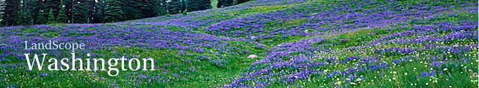 Washington Title Image Large
