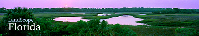 Florida Title Image Large
