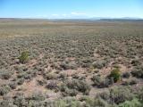 Colorado sagebrush