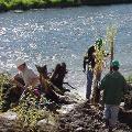 Tree planting along a river